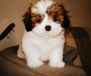puppy, pets, and photography image