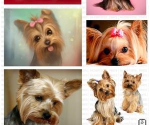 собаки, йорк, and йоркширский терьер image