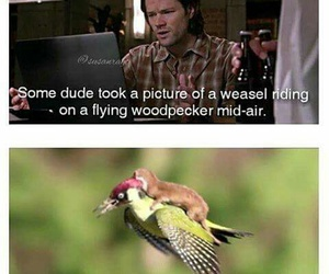 dean winchester, funny, and photo image