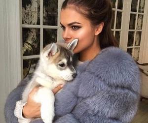 dog, luxury, and puppy image