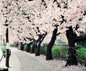 flowers, tree, and japan image