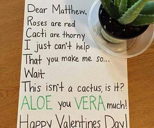 cacti, funny, and humour image