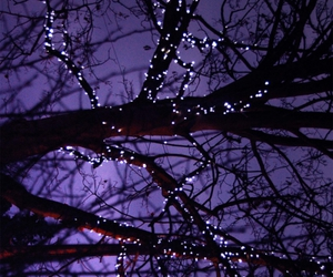 branches, christmas lights, and sparkle image