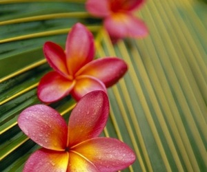 flowers, tropical, and green image