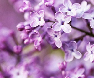 flowers, purple, and perfect image