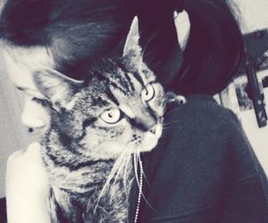 my cat and cat <3 image