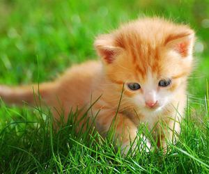 kitten and cat image