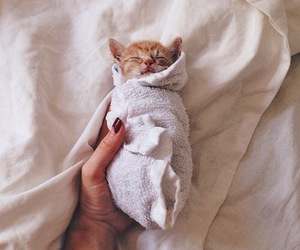 adorable, sleep, and cute image