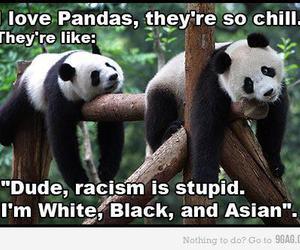 panda, racism, and asian image