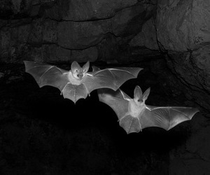 black, dark, and bats image