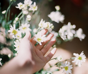 flowers, vintage, and photography image