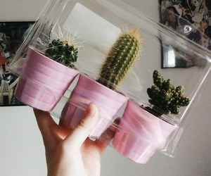 cactus, ikea, and pink image