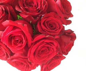 gift, red, and valentine image