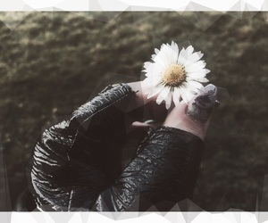 aesthetic, contrast, and daisy image