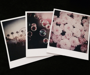 flowers, polaroid, and photo image