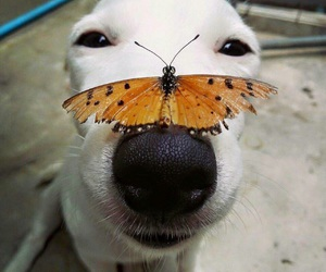 dog, animal, and butterfly image