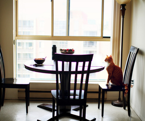 cat, animal, and table image
