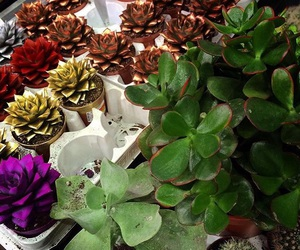 flowers, succulent, and green image