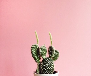 minimal and plants image