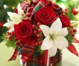 christmas, festive, and flowers image