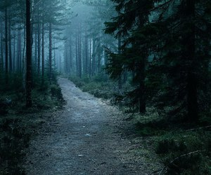 forest, aesthetic, and beautiful image
