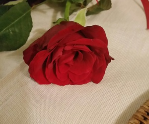 amazing, red, and rose image