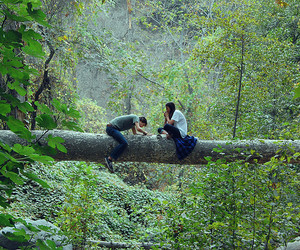 couple, tree, and nature image