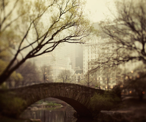 new york, bridge, and Central Park image