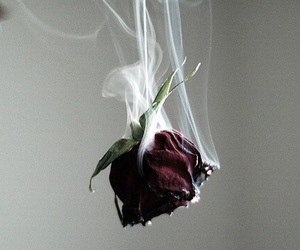 rose, flowers, and smoke image