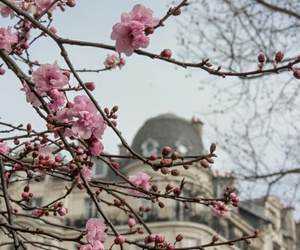 architecture, background, and blossom image