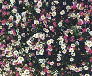 flowers and colorful flowers image