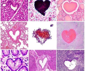 heart and histology image