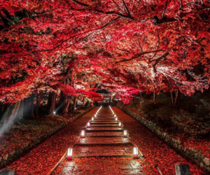 nature, red, and japan image