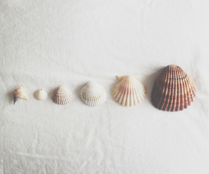 shell, sea, and white image