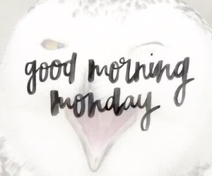 chouette, happy, and monday image