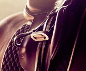 horse and saddle image