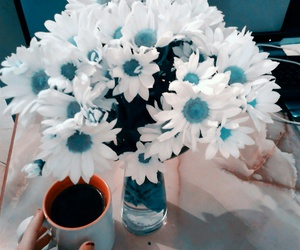 beauty, coffee, and daisies image