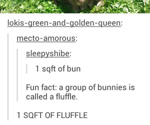bun, lol, and bunnies image