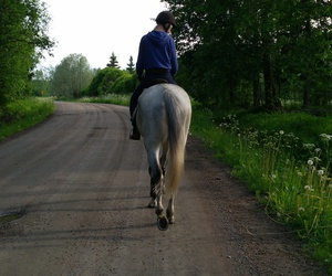 country, countryside, and equestrian image
