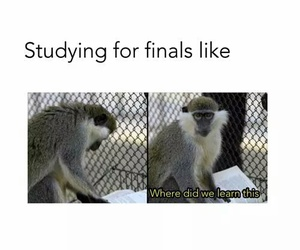 funny, finals, and lesson image