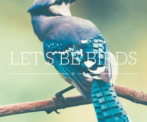animals, birds, and font image