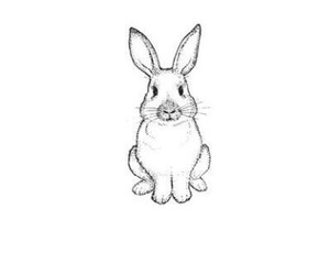 bunny, drawing, and little image