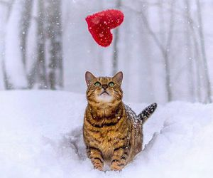 cat, heart, and snow image