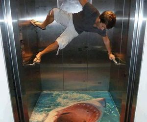 shark, elevator, and art image