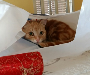 cat, envelope, and hides image