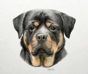 animal art, art, and colored pencil image