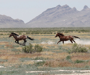 horse, animal, and freedom image