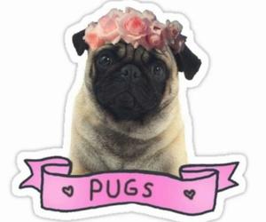 pug, dog, and beautiful image