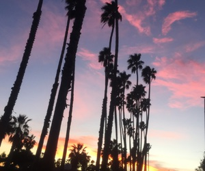 palm trees, Santa Barbara, and sunset image