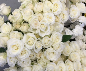 white roses, flowers, and roses image